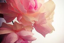 Crafts / Paper flowers