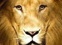 Hear Me Roar!! / by Kayleigh Burleson