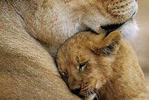 (10) Lion
