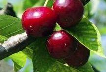 Objednání ovocných keřů