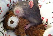 rat&husky♡