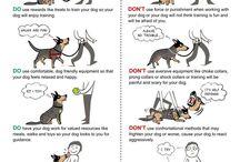 Dog training advice