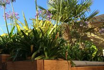 Scape Landscaping Garden Projects / Completed garden redesign and build projects in Exeter and Devon