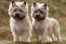 Puppy, puppy, puppy! / by Peyton Frank