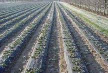 Applicazioni - Agricoltura