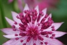 Flora & Fauna / by Lauren McPherson