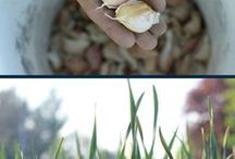 Homegrown / Home grown foods, gardening