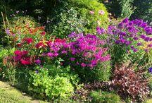 Outdoors - My Garden