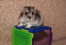 Hamsters ♪