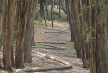 Locations: Presidio - Winding Snake and Lovers Lane / Magical Place in the Presido.  Home of an amazing sculpture/plaything by Andy Goldsworthy.