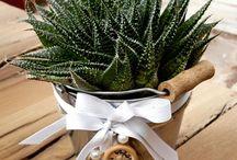 aloe / succulents, cactus, plant, indoorplant, giromagi