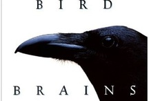 Bird Brains / by Pat Price