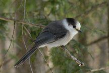Mountain Animals and Birds