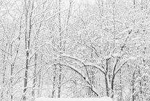 Zima w obrazie