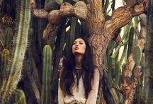 cactus shoot
