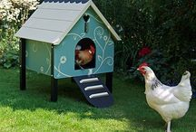 Chicken Coops / by Coco Brown