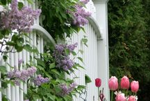 Beautiful picket fences