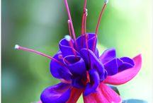 Garden ideas / Anything 'gardenny'