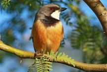 WA Birds