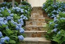 Garden / by Retta Book