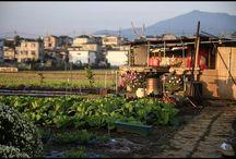 徹夜明けに見るとムカつく系の朝日。 today's morning #farm #morning #sunnyday #畑 #朝日写真