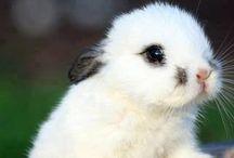 Lapin  / Les êtres les plus mignons de la Terre