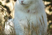 :-) beautiful,,,animal's / by Jovi L