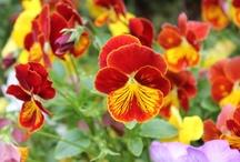 Flowers  / I take photos of flowers everywhere I go / by Joan McPherson