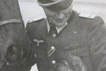 soldier puppy horse