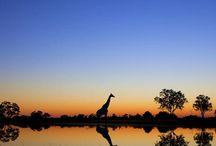 Book1: Under a Botswana Sky