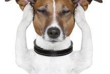 Remedios caseros mascotas