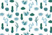 ilustracion cactus
