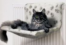 Cat Basket And Beds