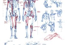 Study muscle and bone