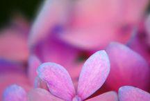 // flower power //