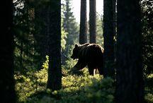 Bear ✴