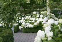 Outoor Decor / Gardening and landscaping ideas