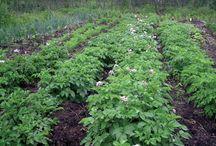 Grow food not lawns / by Meg Bodin