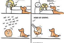 Cães e Gatus