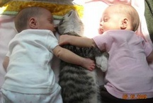 Too Cute! / Here you'll find the most adorable photos of just about anything.