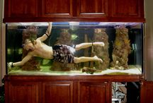 Aquariums, tanks and such like / by Drew It Yourself - D.I.Y.