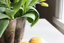 flores y plantas / inspiración natural