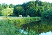 Autour de l'étang ... / Découvrez toutes les photos prises autour de l'étang de Marcheval