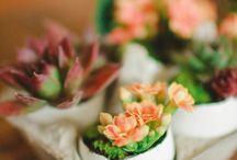 Garden Ideas/Plants