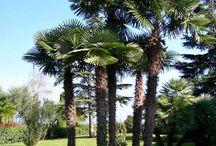 Plants: Palms