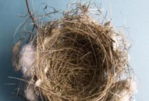 Empty Nest :( / Surviving my girls growing up and out of the nest! / by Christina Price