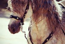 кони беспредела