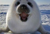 cute faces :)