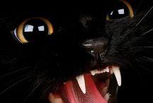 "CHATS ""HARCOURT"" / Chats, cats"
