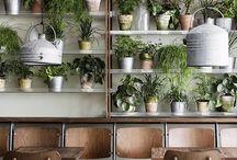 Plants (interior)